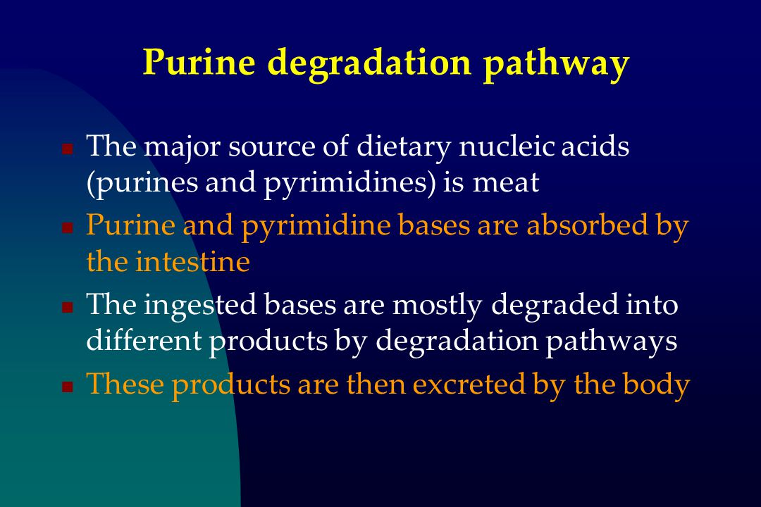 Purine degradation pathway The major source of dietary nucleic acids (purines and pyrimidines) is meat Purine and pyrimidine bases are absorbed by the intestine The ingested bases are mostly degraded into different products by degradation pathways These products are then excreted by the body