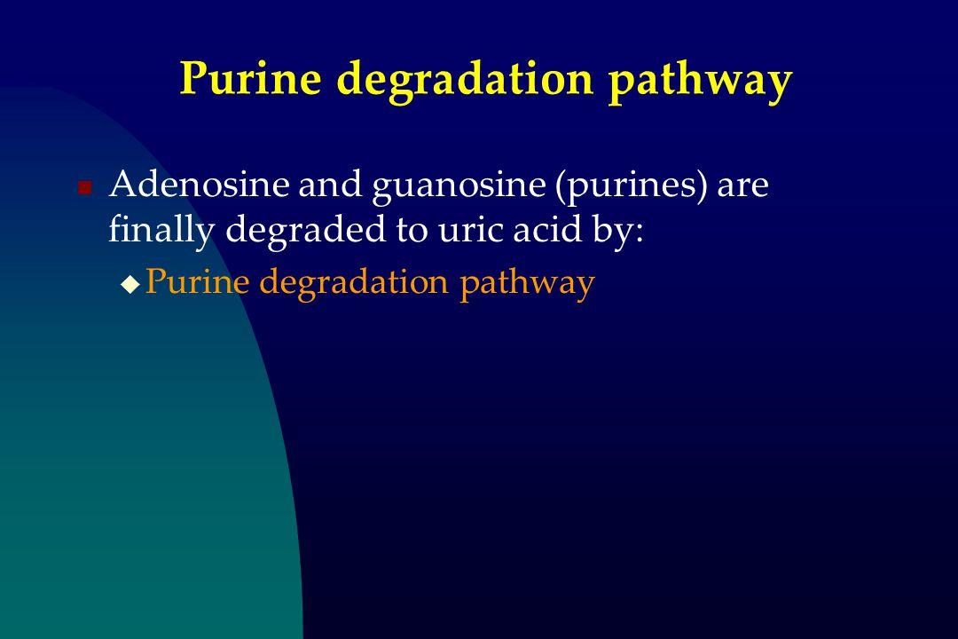 Purine degradation pathway Adenosine and guanosine (purines) are finally degraded to uric acid by:  Purine degradation pathway