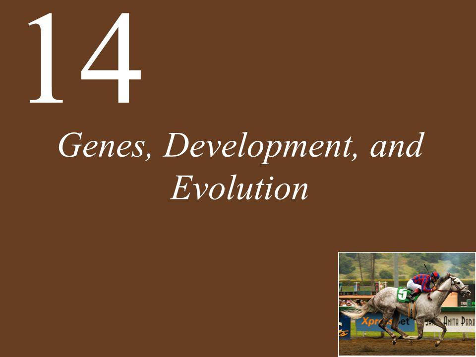 Genes, Development, and Evolution 14