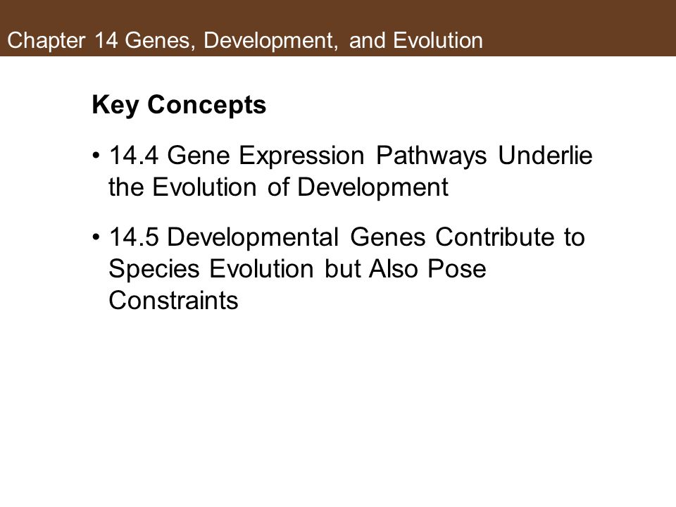 Chapter 14 Genes, Development, and Evolution Key Concepts 14.4 Gene Expression Pathways Underlie the Evolution of Development 14.5 Developmental Genes Contribute to Species Evolution but Also Pose Constraints