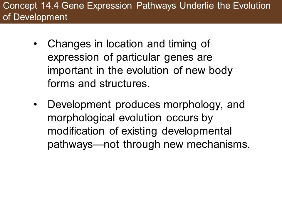 Concept 14.4 Gene Expression Pathways Underlie the Evolution of Development Changes in location and timing of expression of particular genes are important in the evolution of new body forms and structures.