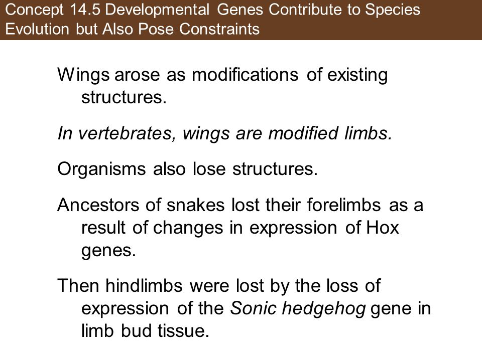 Concept 14.5 Developmental Genes Contribute to Species Evolution but Also Pose Constraints Wings arose as modifications of existing structures.