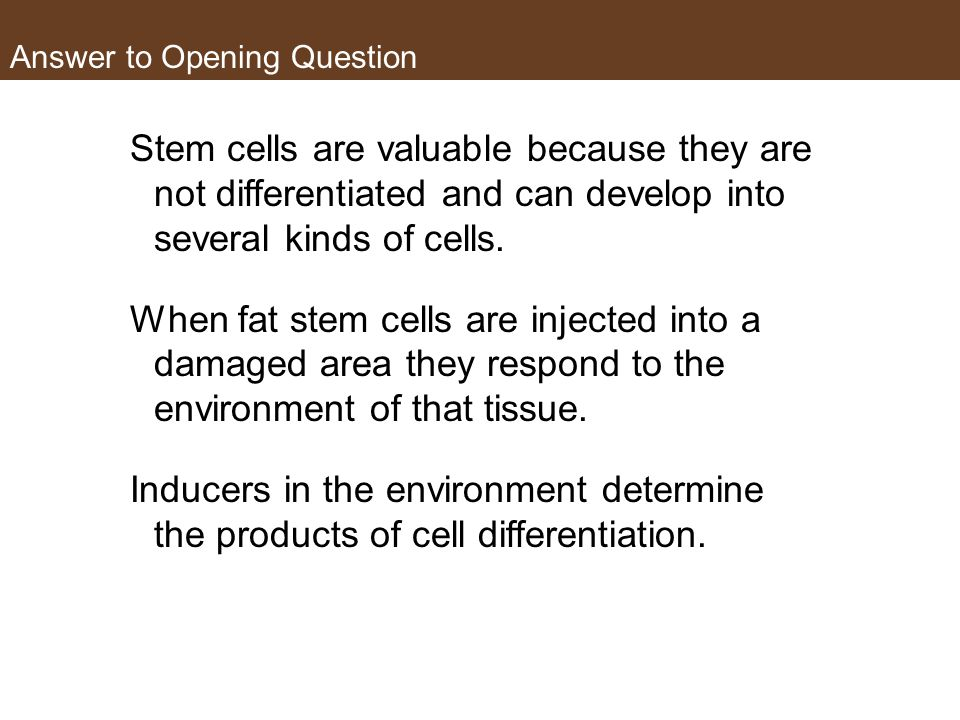 Answer to Opening Question Stem cells are valuable because they are not differentiated and can develop into several kinds of cells.