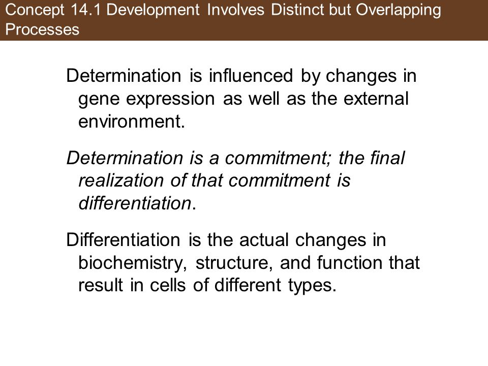 Concept 14.1 Development Involves Distinct but Overlapping Processes Determination is influenced by changes in gene expression as well as the external environment.