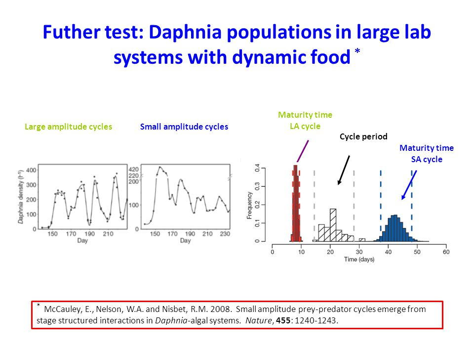 Futher test: Daphnia populations in large lab systems with dynamic food * Maturity time LA cycle Cycle period Maturity time SA cycle Large amplitude c