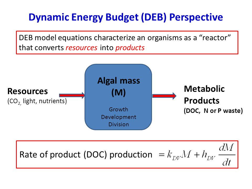 Dynamic Energy Budget (DEB) Perspective Algal mass (M) Growth Development Division Resources (CO 2, light, nutrients) Metabolic Products (DOC, N or P