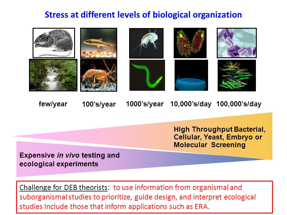 100's/year 1000's/year10,000's/day100,000's/day High Throughput Bacterial, Cellular, Yeast, Embryo or Molecular Screening Stress at different levels o