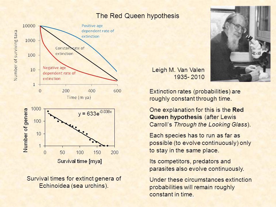 The Red Queen hypothesis Extinction rates (probabilities) are roughly constant through time. One explanation for this is the Red Queen hypothesis (aft