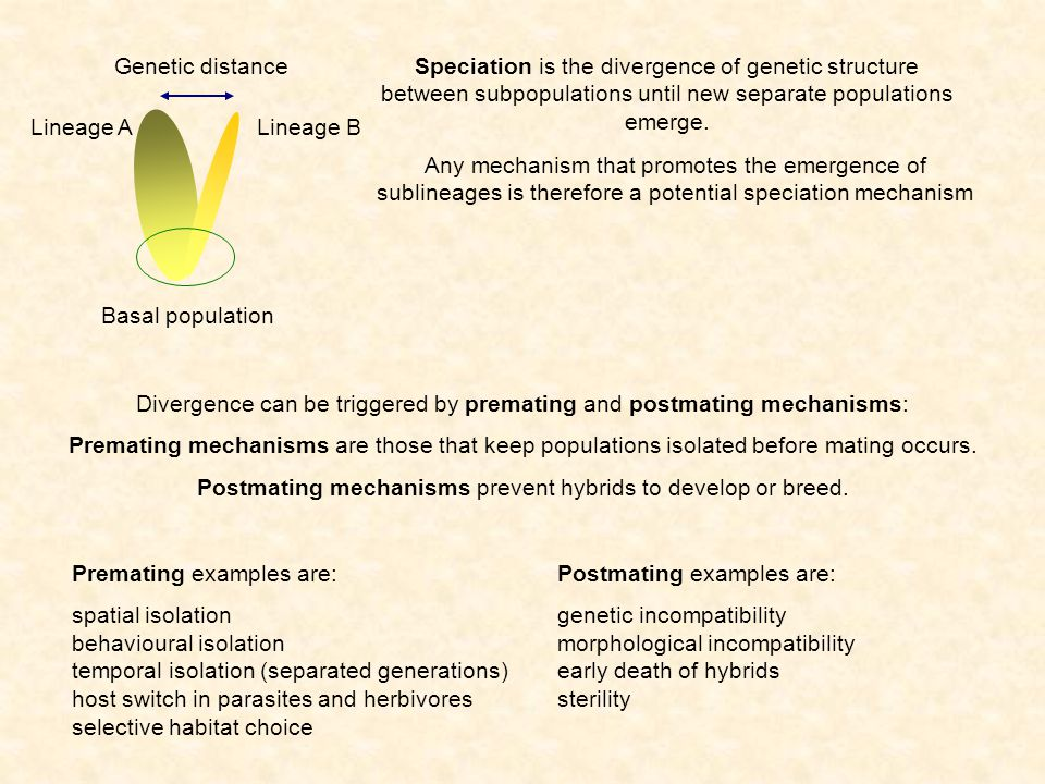 Speciation is the divergence of genetic structure between subpopulations until new separate populations emerge. Any mechanism that promotes the emerge