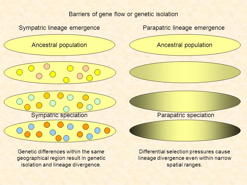 How fast is speciation.