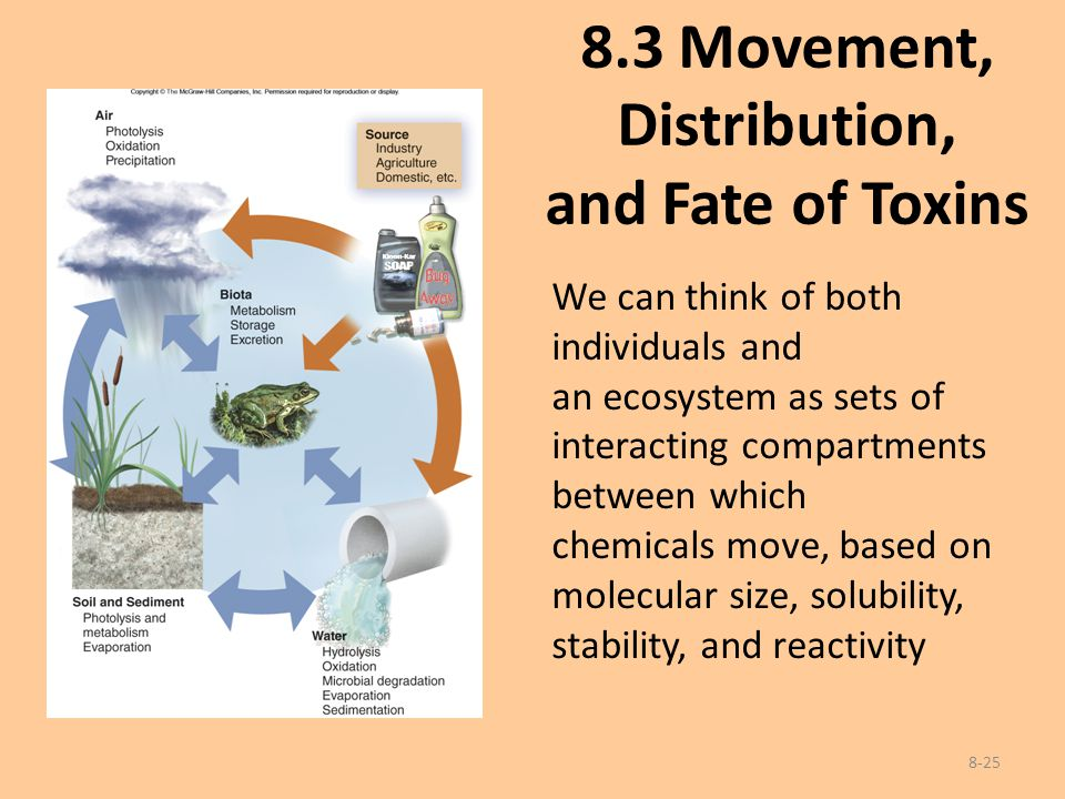 8.3 Movement, Distribution, and Fate of Toxins 8-25 We can think of both individuals and an ecosystem as sets of interacting compartments between whic