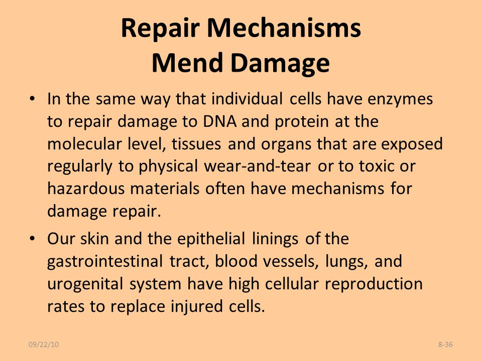 Repair Mechanisms Mend Damage In the same way that individual cells have enzymes to repair damage to DNA and protein at the molecular level, tissues a