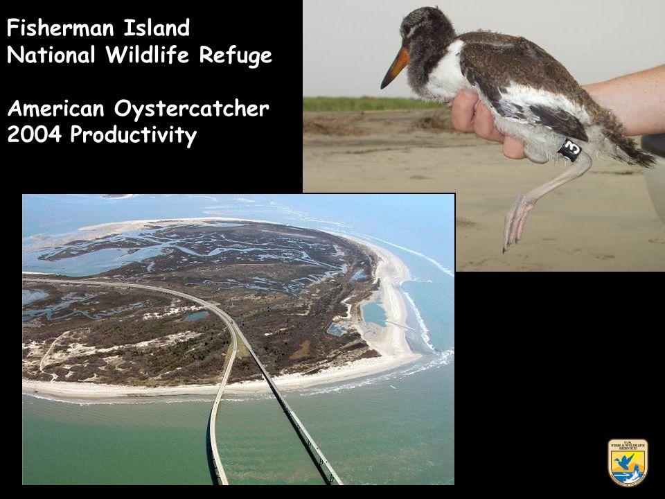 Fisherman Island National Wildlife Refuge American Oystercatcher 2004 Productivity
