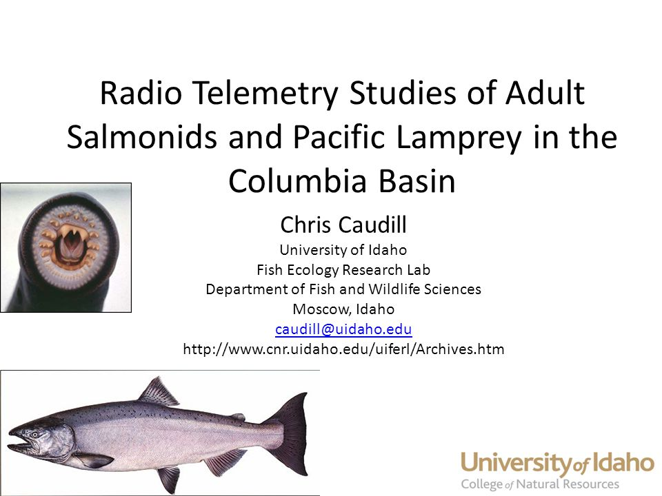 Radio Telemetry Studies of Adult Salmonids and Pacific Lamprey in the Columbia Basin Chris Caudill University of Idaho Fish Ecology Research Lab Department of Fish and Wildlife Sciences Moscow, Idaho caudill@uidaho.edu http://www.cnr.uidaho.edu/uiferl/Archives.htm