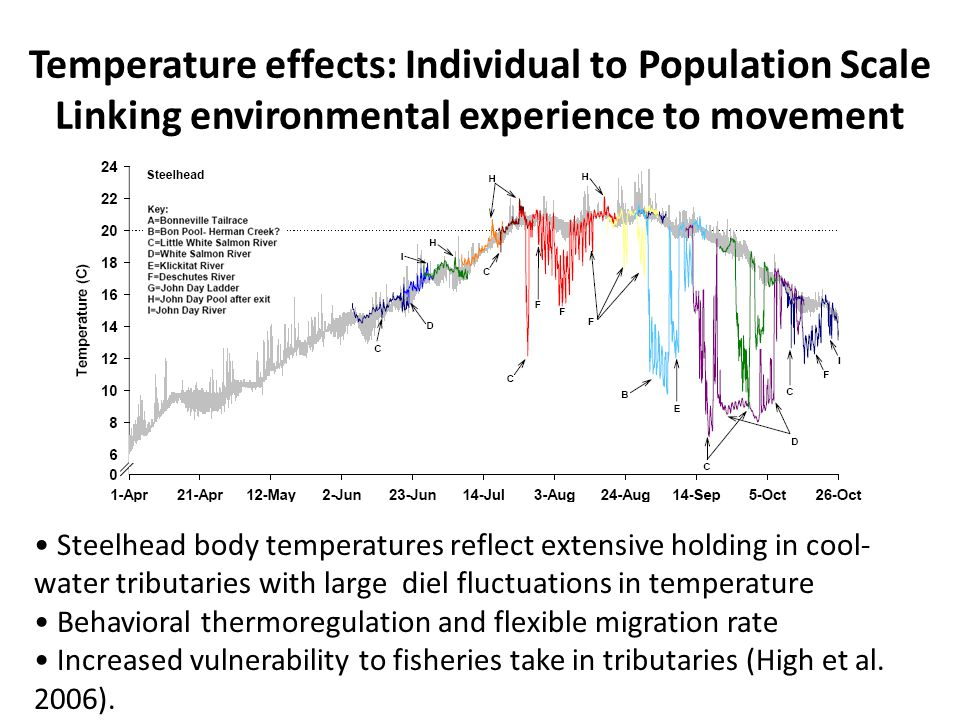 Steelhead body temperatures reflect extensive holding in cool- water tributaries with large diel fluctuations in temperature Behavioral thermoregulation and flexible migration rate Increased vulnerability to fisheries take in tributaries (High et al.