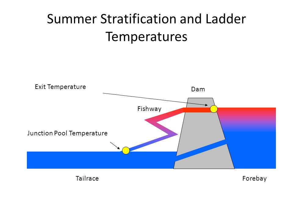 Summer Stratification and Ladder Temperatures Dam TailraceForebay Fishway Exit Temperature Junction Pool Temperature