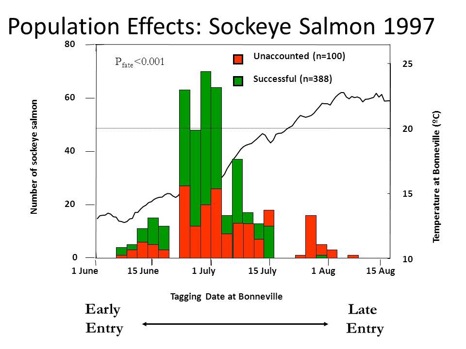 Population Effects: Sockeye Salmon 1997 Late Entry Early Entry