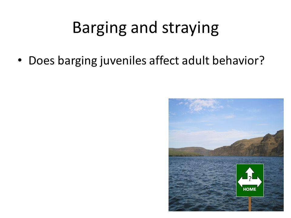 Barging and straying Does barging juveniles affect adult behavior HOME