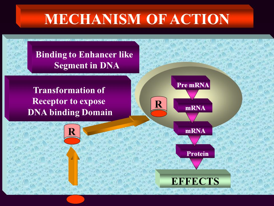 MECHANISM OF ACTION R Transformation of Receptor to expose DNA binding Domain Binding to Enhancer like Segment in DNA Pre mRNA mRNA Protein R EFFECTS