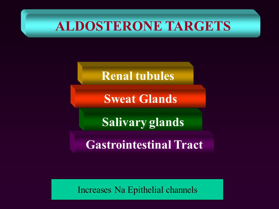 ALDOSTERONE TARGETS Renal tubules Sweat Glands Salivary glands Gastrointestinal Tract Increases Na Epithelial channels
