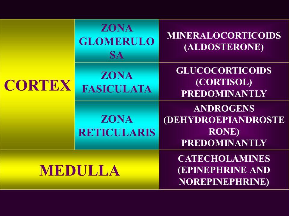CORTEX ZONA GLOMERULO SA MINERALOCORTICOIDS (ALDOSTERONE) ZONA FASICULATA GLUCOCORTICOIDS (CORTISOL) PREDOMINANTLY ZONA RETICULARIS ANDROGENS (DEHYDROEPIANDROSTE RONE) PREDOMINANTLY MEDULLA CATECHOLAMINES (EPINEPHRINE AND NOREPINEPHRINE)