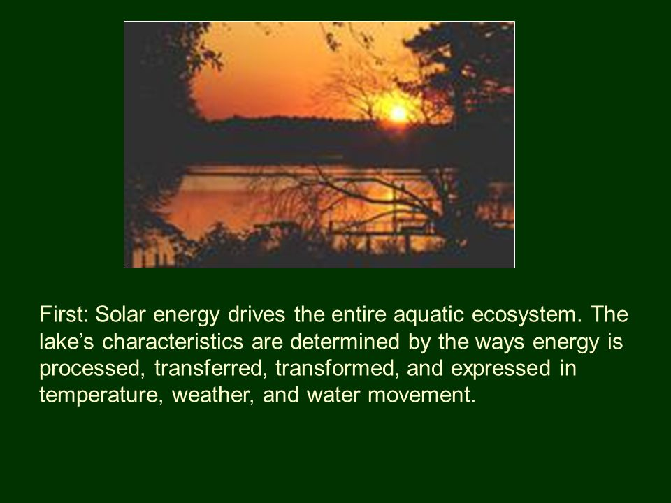 First: Solar energy drives the entire aquatic ecosystem.