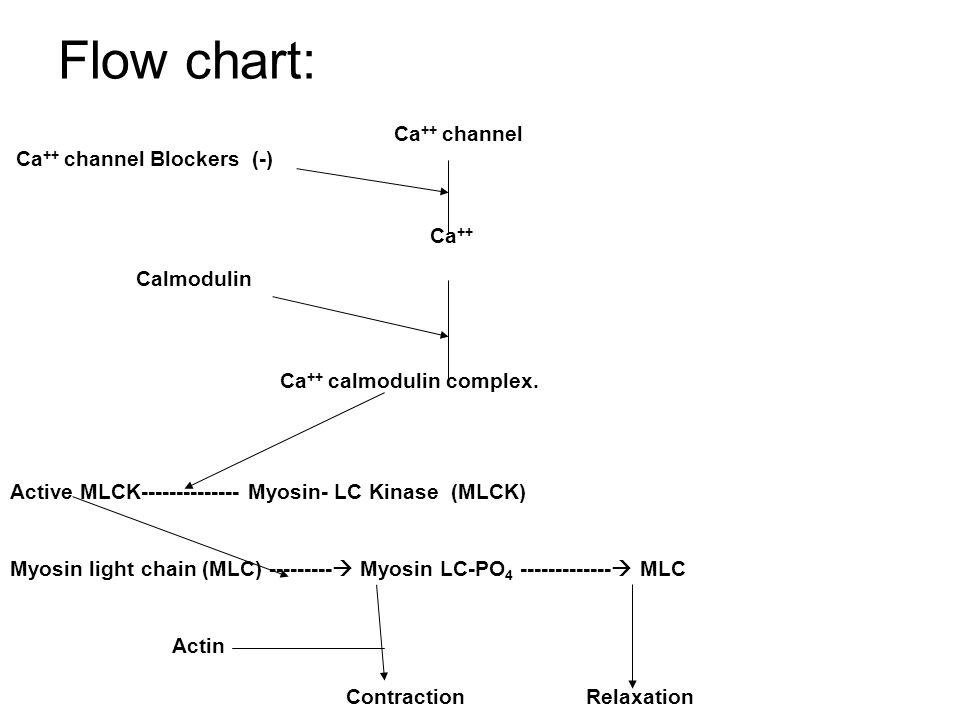 Flow chart: Ca ++ channel Ca ++ channel Blockers (-) Ca ++ Calmodulin Ca ++ calmodulin complex.