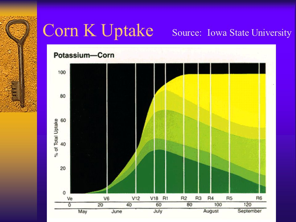 Corn K Uptake Source: Iowa State University