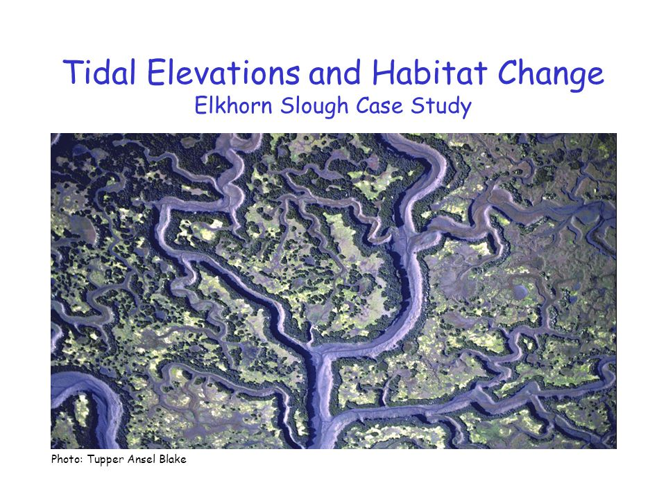 Tidal Elevations and Habitat Change Elkhorn Slough Case Study Photo: Tupper Ansel Blake