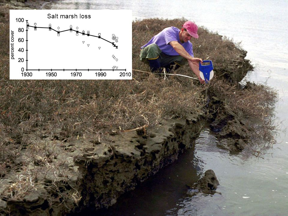 Salt marsh loss