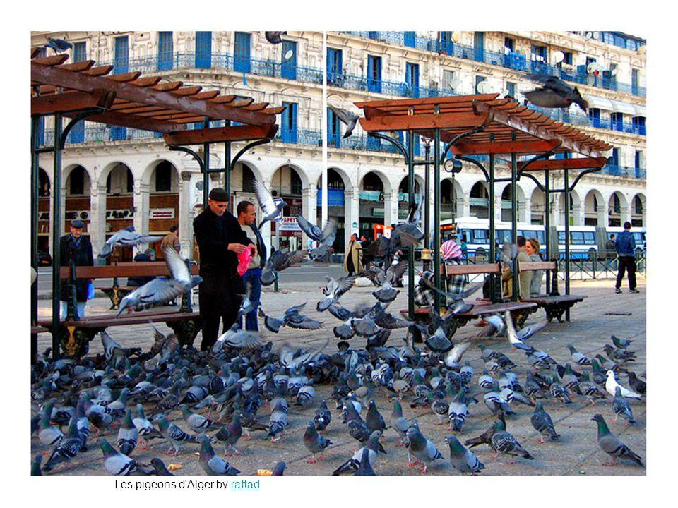 Les pigeons d Alger by raftadraftad