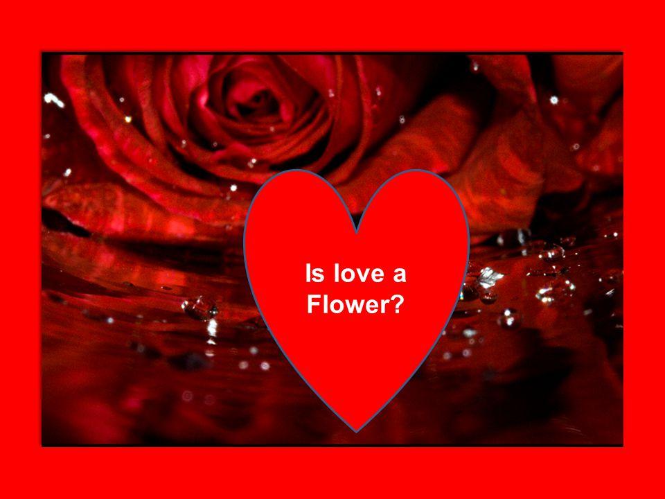Is love a Flower?