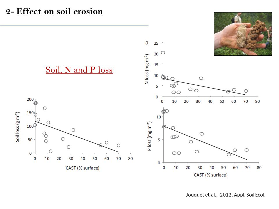 Jouquet et al., 2012. Appl. Soil Ecol. Soil, N and P loss 2- Effect on soil erosion