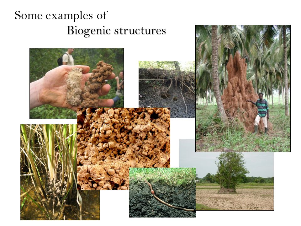Some examples of Biogenic structures