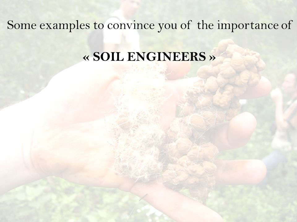 Some examples to convince you of the importance of « SOIL ENGINEERS »
