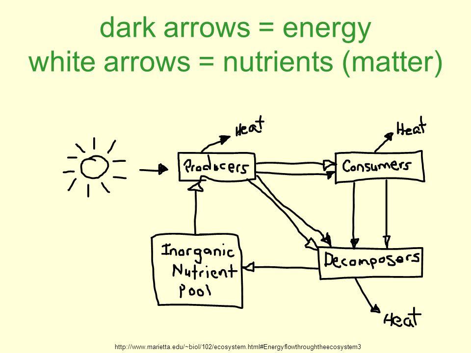 dark arrows = energy white arrows = nutrients (matter) http://www.marietta.edu/~biol/102/ecosystem.html#Energyflowthroughtheecosystem3