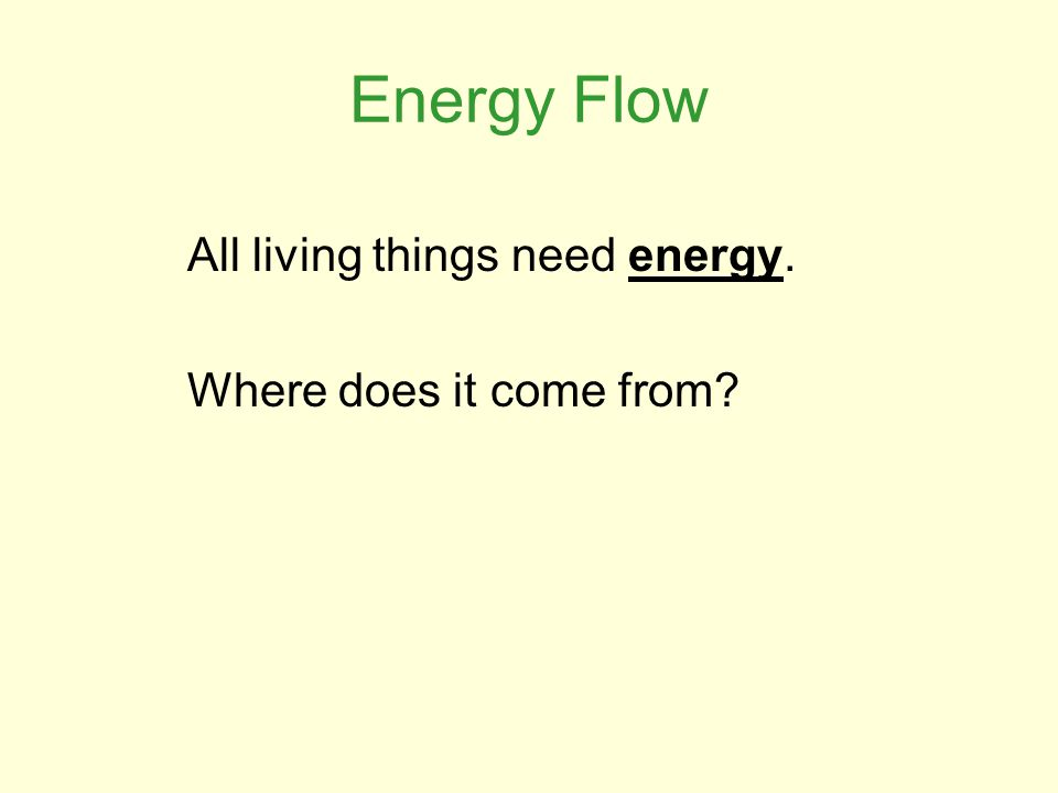 Energy Flow All living things need energy. Where does it come from?