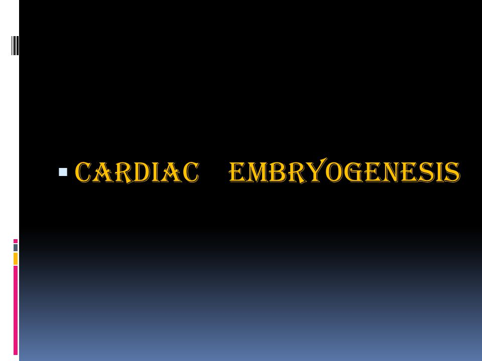  Cardiac Embryogenesis