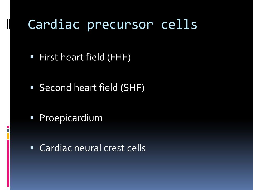 Cardiac precursor cells  First heart field (FHF)  Second heart field (SHF)  Proepicardium  Cardiac neural crest cells