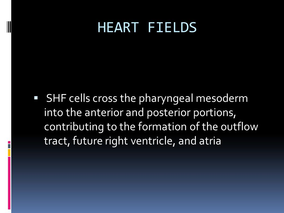 HEART FIELDS  SHF cells cross the pharyngeal mesoderm into the anterior and posterior portions, contributing to the formation of the outflow tract, future right ventricle, and atria