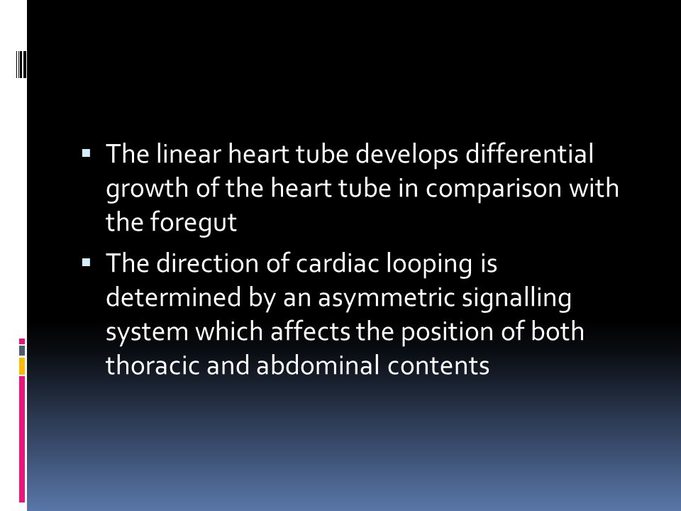  The linear heart tube develops differential growth of the heart tube in comparison with the foregut  The direction of cardiac looping is determined by an asymmetric signalling system which affects the position of both thoracic and abdominal contents