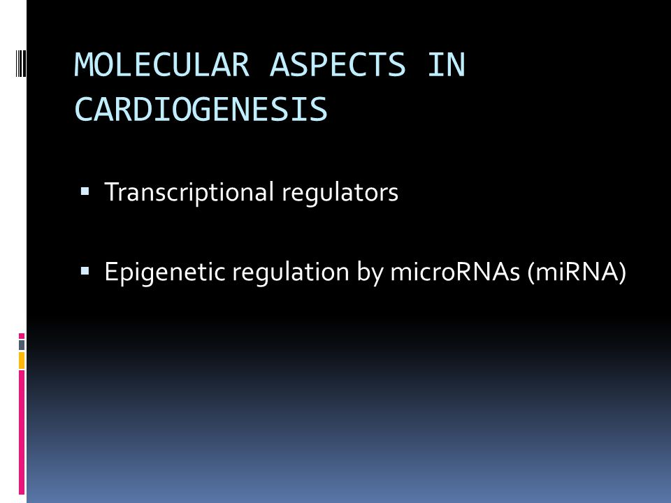 MOLECULAR ASPECTS IN CARDIOGENESIS  Transcriptional regulators  Epigenetic regulation by microRNAs (miRNA)