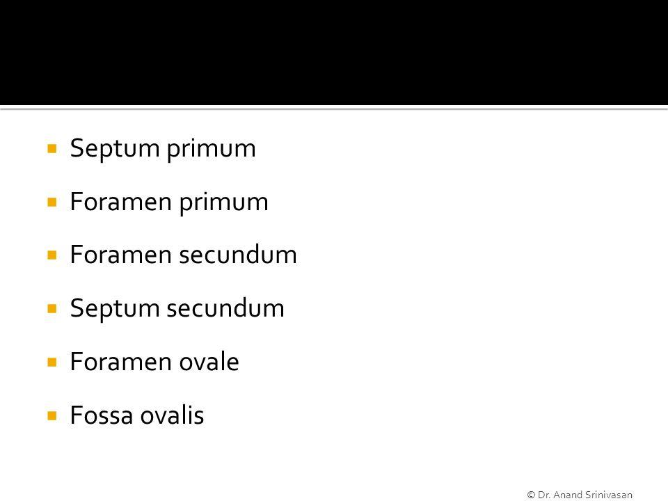  Septum primum  Foramen primum  Foramen secundum  Septum secundum  Foramen ovale  Fossa ovalis