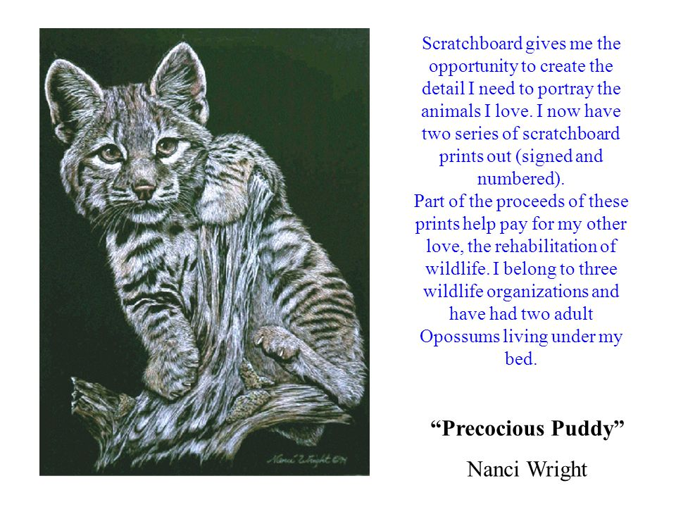 Precocious Puddy Nanci Wright Scratchboard gives me the opportunity to create the detail I need to portray the animals I love.