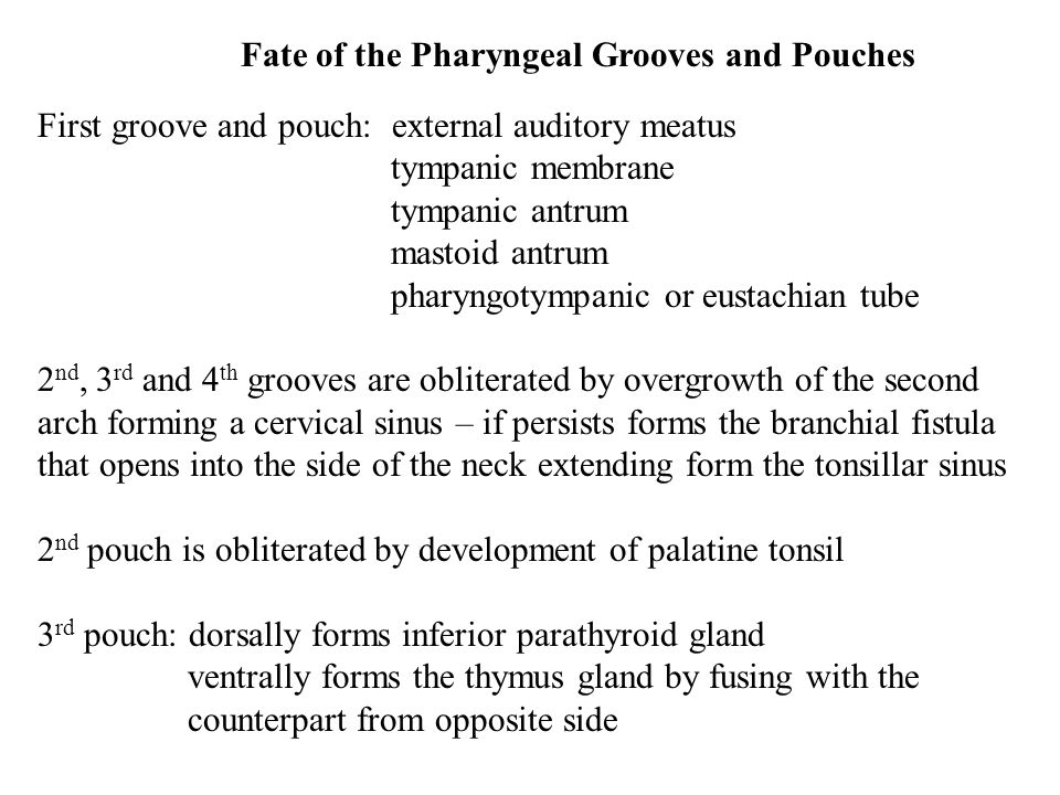 Fate of the Pharyngeal Grooves and Pouches First groove and pouch: external auditory meatus tympanic membrane tympanic antrum mastoid antrum pharyngotympanic or eustachian tube 2 nd, 3 rd and 4 th grooves are obliterated by overgrowth of the second arch forming a cervical sinus – if persists forms the branchial fistula that opens into the side of the neck extending form the tonsillar sinus 2 nd pouch is obliterated by development of palatine tonsil 3 rd pouch: dorsally forms inferior parathyroid gland ventrally forms the thymus gland by fusing with the counterpart from opposite side