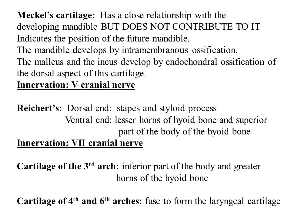 Meckel's cartilage: Has a close relationship with the developing mandible BUT DOES NOT CONTRIBUTE TO IT Indicates the position of the future mandible.