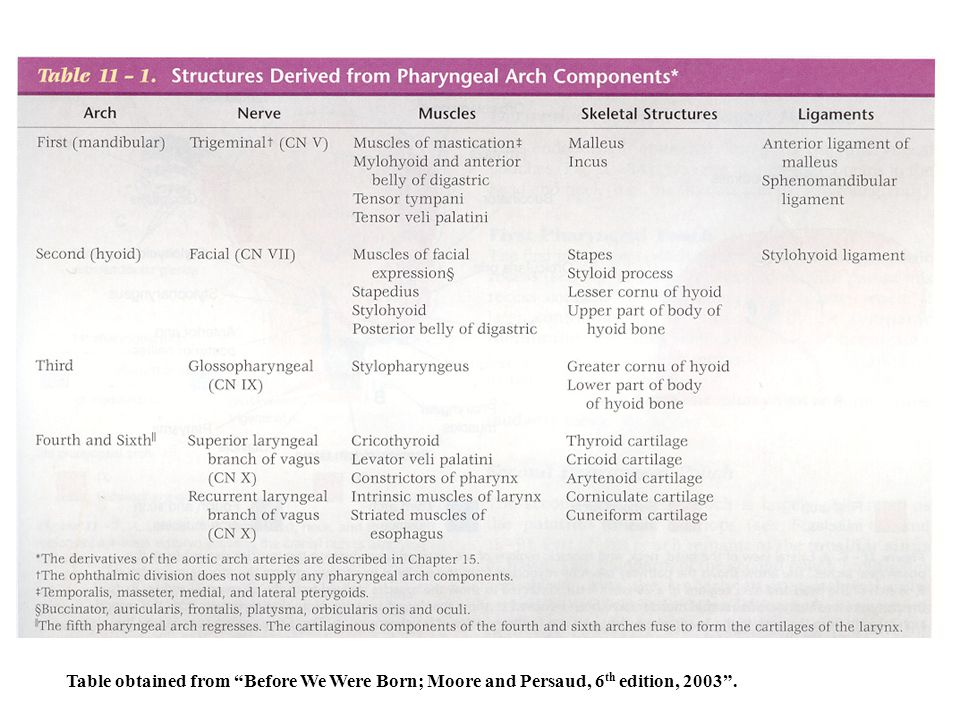 Table obtained from Before We Were Born; Moore and Persaud, 6 th edition, 2003 .