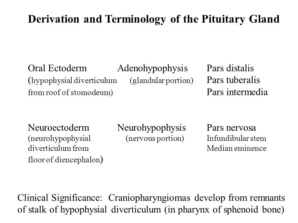 Derivation and Terminology of the Pituitary Gland Oral Ectoderm AdenohypophysisPars distalis ( hypophysial diverticulum (glandular portion) Pars tuberalis from roof of stomodeum) Pars intermedia NeuroectodermNeurohypophysisPars nervosa (neurohypophysial (nervous portion)Infundibular stem diverticulum fromMedian eminence floor of diencephalon ) Clinical Significance: Craniopharyngiomas develop from remnants of stalk of hypophysial diverticulum (in pharynx of sphenoid bone)