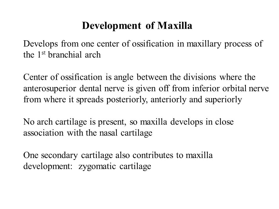 Development of Maxilla Develops from one center of ossification in maxillary process of the 1 st branchial arch Center of ossification is angle between the divisions where the anterosuperior dental nerve is given off from inferior orbital nerve from where it spreads posteriorly, anteriorly and superiorly No arch cartilage is present, so maxilla develops in close association with the nasal cartilage One secondary cartilage also contributes to maxilla development: zygomatic cartilage