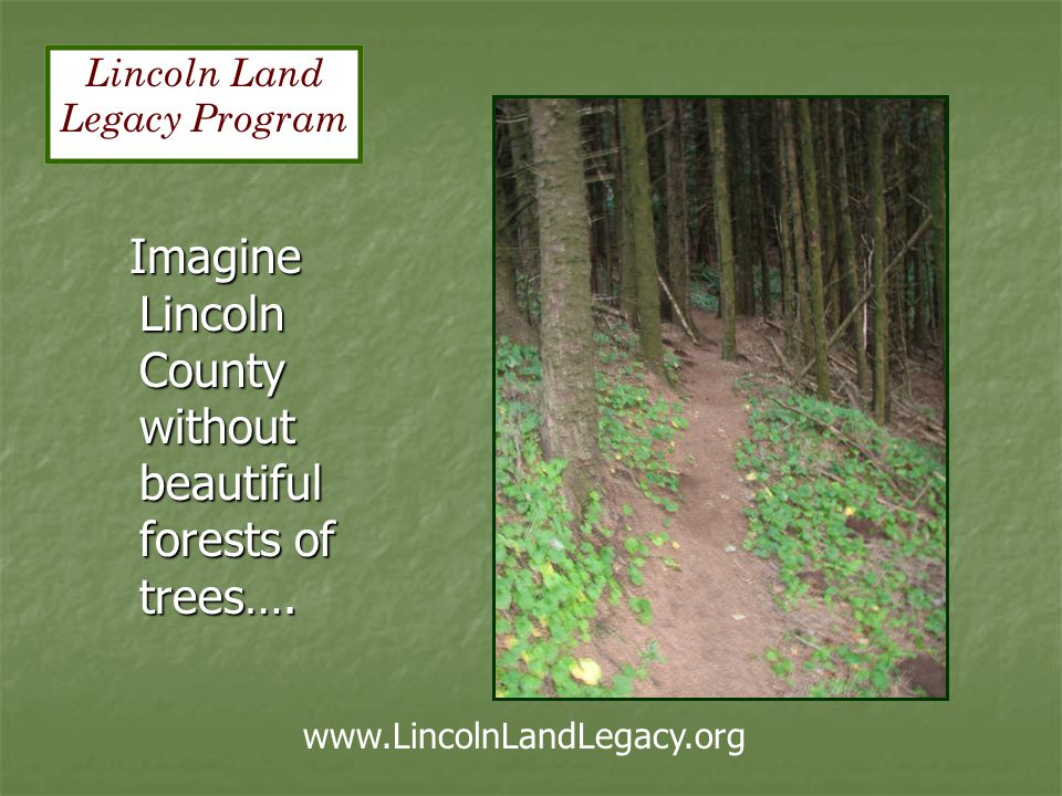 Imagine Lincoln County without beautiful forests of trees….